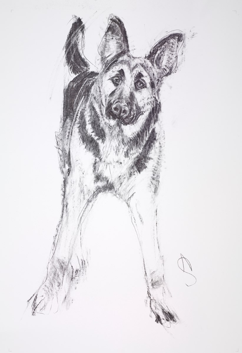Alsatian II by april shepherd -  sized 20x30 inches. Available from Whitewall Galleries